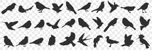 Silhouettes Of Birds Doodle Set. Collection Of Hand Drawn Various Black Silhouettes Of Flying Sitting Birds With Wings In Rows Isolated On Transparent Background