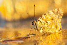 Selective Focus. Yellow Background With Butterfly. Beautiful Natural Background With Butterfly Sitting In Bright Sunlight.