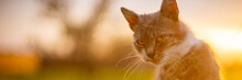Portrait Of A Cat At Sunset In The Garden