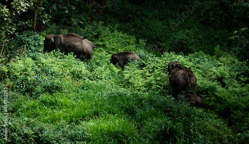 Fényképezés wildlife