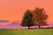 Two Lonely Trees At Sunset In Autumn At Sunset