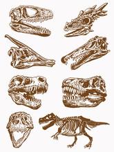 Graphical Set Of Skulls Of Dinosaurs,vintage Illustration