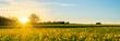 canvas print picture - Blühendes gelbes Rapsfeld im Sonnenuntergang