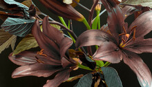 Abstract Bouquet, Flowers And Stems, Lilies And Garden Plants, Dark Background.