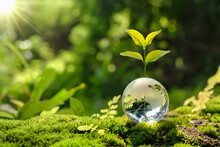 Lass Globe Ball With Tree Growing And Green Nature Blur Background. Eco Earth Day Concept