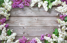 Blooming Lilac Flowers (syringa Vulgaris) On Rustic Wooden Background