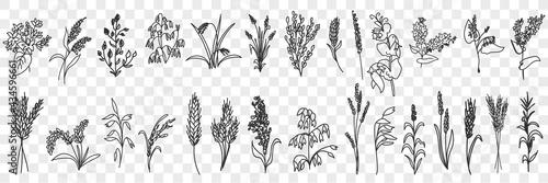 Obraz na plátně Fields grass and plants doodle set