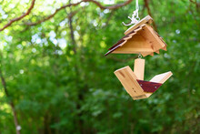 Hanging Bird Feeder In The Forest On A Green Background. Animal Concept Care