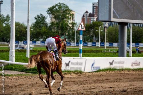 Obraz na plátně Arabian horse racing at the racetrack on a sunny Sunday afternoon