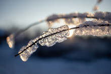 Frost, Ice, Snow Covered Small Tree Branch In Sunrise Light