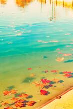 Hojas De Haya Otoñales. Paisaje Otoñal De Bosque, Lago Y Agua.
