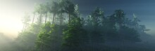 The Edge Of The Forest In The Morning In The Sun, The Forest In The Fog, The Trees In The Rays In The Morning In The Haze, 3D Rendering