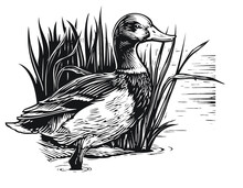 Illustration Of A Duck