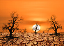 The Trees Die In Drought Because Of Global Warming