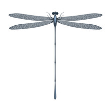 A Beautiful Gray Dragonfly With Transparent Wings And Large Eyes. Summer Gray Flying Insect. Vector Illustration Isolated On White Background