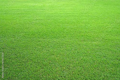 Fotografía Nature green grass in the garden, Lawn pattern texture background, Perspective