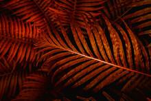 Full Frame Of Fern Leaves Texture Background. Tropical Leaf