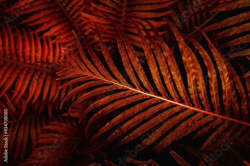 Full Frame of Fern Leaves Texture Background. tropical leaf Fototapet