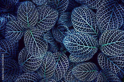 Fotografía closeup nature view of tropical leaf background, dark tone concept
