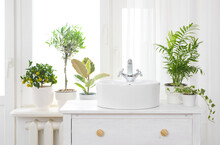 Hand Washing Sink In Front Of Window And House Plants