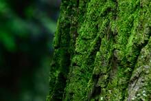 濃い緑の森と木