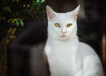 View Through A Window Of A White Cat Sitting On A Window Sill In Sunlight