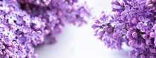 Beautiful Floral Spring Background, Banner With Lilac Branches. Lilac Close-up, Blurred Bokeh Background, Sunlight. Lilac And Pink Flowers.