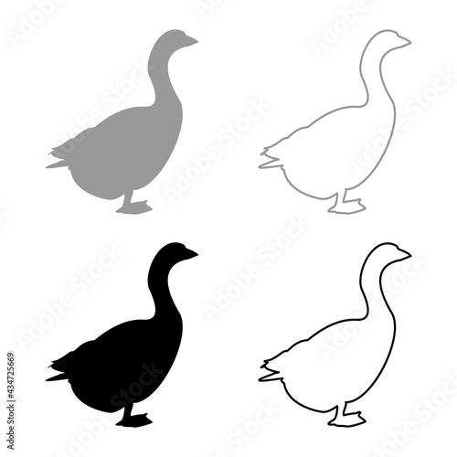Fotografia Goose Gosling Geese Anser Gander silhouette grey black color vector illustration
