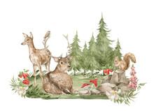 Watercolor Forest Landscape. Trees, Field, Fir-trees, Wild Animals. Deers, Bird, Squirrel, Meadow Flowers, Mushrooms. Summer Woodland, Nature Scene, Valley