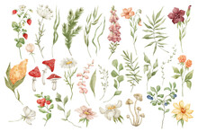 Watercolor Set With Wild Meadow Flowers, Herbs, Leaves And Berries. Forest Botany, Summer Nature Elements. Strawberries, Mushrooms, Fir Branch, Bright Field Wildflowers.