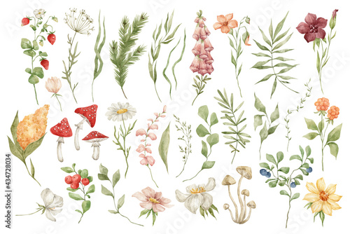 Papel de parede Watercolor set with wild meadow flowers, herbs, leaves and berries