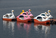 Swan Pedal Boats On Lake Kawaguchi, Japan. Pedaling Birds On The Pond. Duck Boat On River.