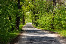 Rural Road Landscape Under Oak Trees In Spring. Green Tunnel And Empty Asphalt Road.