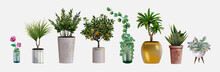 Collection Of Vector Realistic Detailed House Or Office Plant For Interior Design And Decoration. Tropical And Mediterranean Plant And Flowers For Interior Decor Of Home Or Office