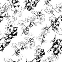 Gooseberry Berries Vector Graphic Illustration Print Textile Patern Seamless Fruit Jam Juice Summer Harvest Engraving Style