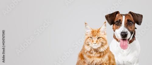 Canvas Cat.