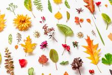 Autumn Flat Lay On The White.