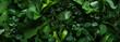 Leinwandbild Motiv Green leaves as background