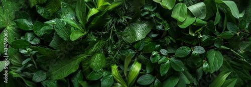 Valokuva Green leaves as background