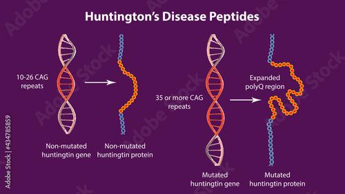 Canvastavla Molecular genesis of Huntington's disease, 3D illustration