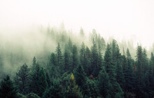 Trees Forest Fog