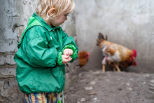 A Child In A Green Jacket In A Hen House Holds Grain For Feeding The Birds.