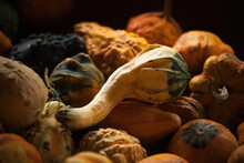 Fall Harvest Of Gourds