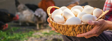 Chicken Eggs In The Hands Of A Man. Selective Focus.