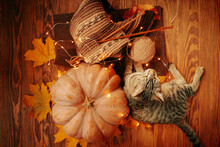 Flat Lay Of An Autumn Composition With Lights From A Garland. A Tabby Cat Next To A Ripe Pumpkin, Fall Leaves, And A Knitted Scarf Made Of Brown Yarn.