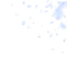 Light Blue Flower Petals Falling Down. Bold Romant