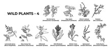 Collection Of Healing Herbs And Plants Hand-drawn