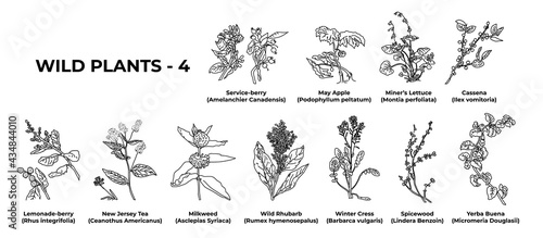 Fotografie, Obraz Collection of healing herbs and plants hand-drawn