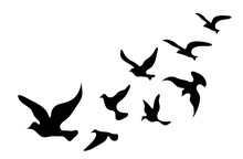 Silhouettes Of Groups Of  Birds On White