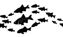 Silhouettes Of Groups Of  Fishes On White. Seamless Background